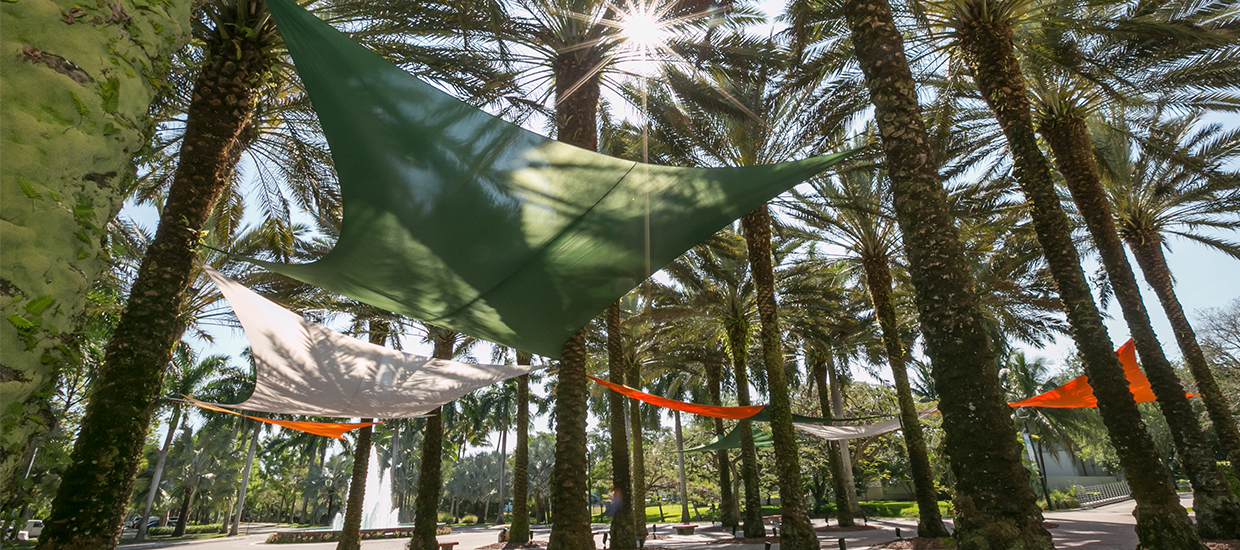 Rows of palm trees outside of Storer Auditorium with orange, green, and white canopies draped across